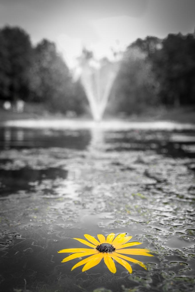 Su ve Çiçek
